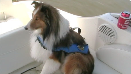 Critter's Inflatable Life Vest for boat dogs