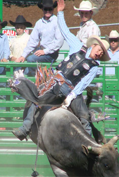 Bull riders: a few marbles short?