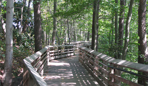The upper level boardwalk takes you quickly to views of the gorge and the New River Gorge Bridge