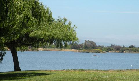 Shoreline Park Mountain View – lake, wetlands, flora and fauna