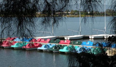 Paddleboats at Shoreline Lake