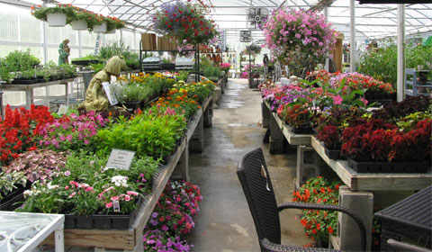 Herbs and flowers in the nursery