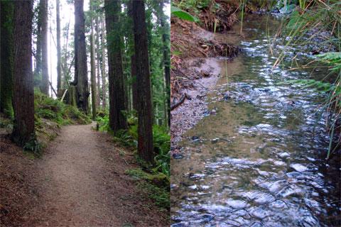 Arcata Redwood Forest
