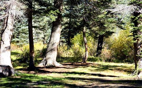 Camping spot in NM