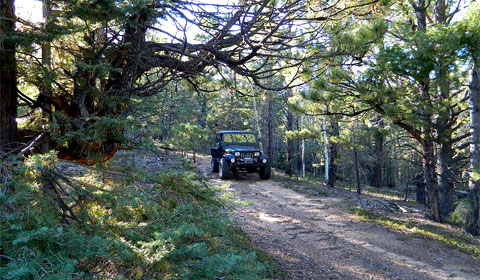 Jeep Wrangler in the woods