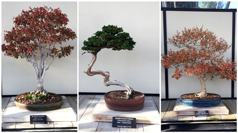 Bonsai trees in Longwood Gardens Conservatory