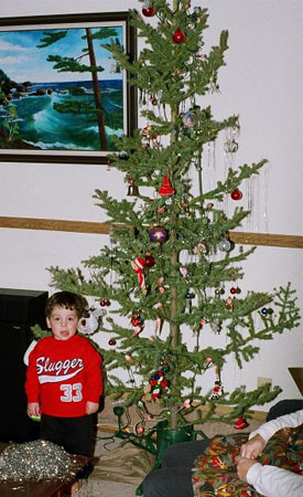 Jack pine Christmas tree, Northwest Territories, Canada