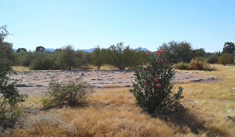 Peeking at the labyrinth, Rio Vista Park, Tucson, Arizona