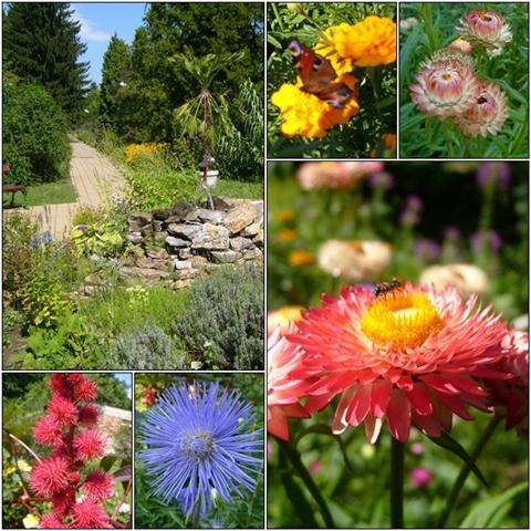 Flowers along the path in Debrecen University - Botanical Garden.