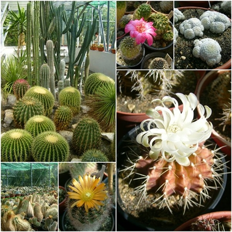 A glimpse of over cacti species.