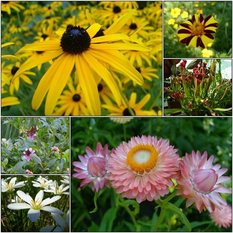 The Strawflowers (bottom right) were my favorites.