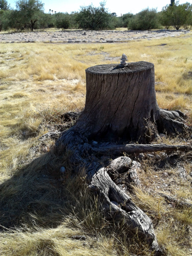Tiny cairn on a dead tree stump, Rio Vista labyrinth, Tucson, Arizona