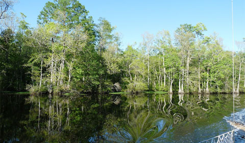 Reflections of the cypress trees along the Pasquotank River in the Dismal Swamp