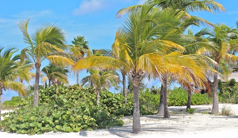 Disney-Dream-Cruise-Castaway-Cay-Dancing Palms