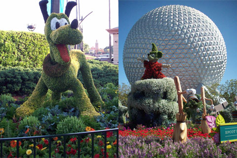 Pluto and Mickey, Disney World