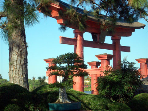 Beautiful bonsai in Japan, Disney World