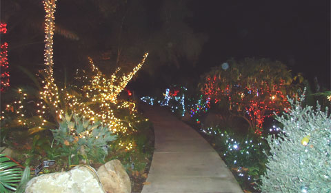 Lighted path at the San Diego Botanic Garden, Encinitas, CA