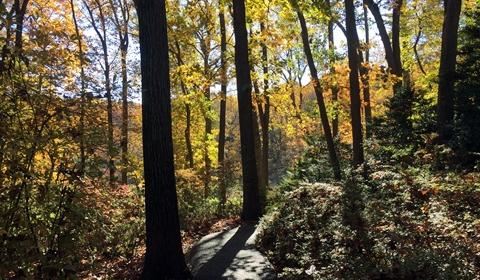 Fall sunlight