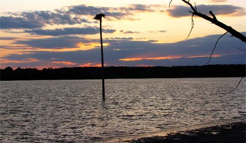 Osprey nest on a power pole in Berlin Lake, Ohio