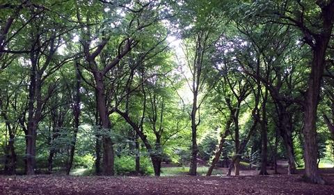 Hoia Woods