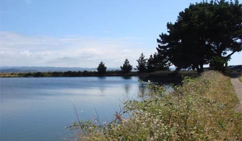Arcata Marshes, Humboldt, California