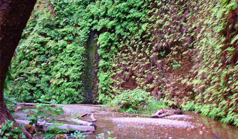 Fern Canyon, Humboldt, California