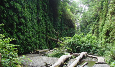 Fern Canyon, Humboldt, California
