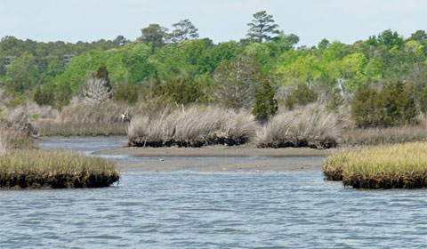 The Intracoastal Waterway - marsh