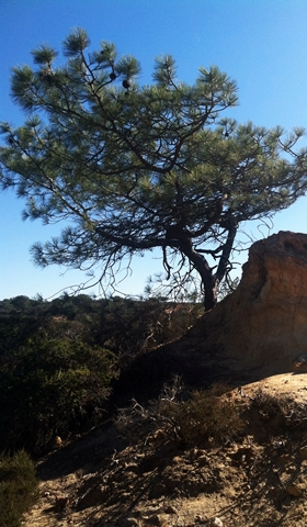 A Quick & Scenic San Diego Hike: Torrey Pines State Natural Reserve