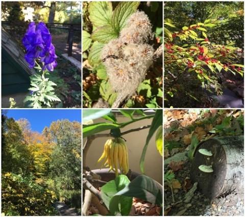 In bloom, in October.