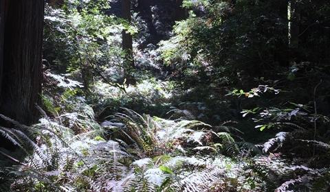 Ferns and fern allies.