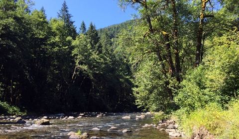 The wild and scenic Salmon River