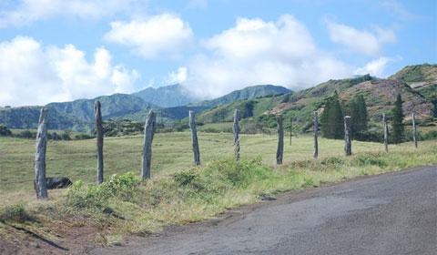 Maui road trip