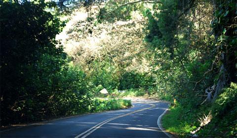 Jungle near Hana on Maui