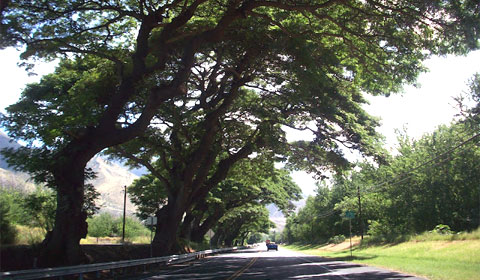 On the road to Hana. Maui.