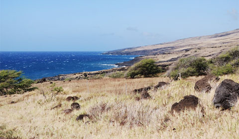 Arid beach, Maui