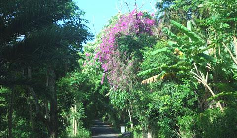 Tiny road, Maui