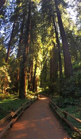 Muir Woods Walkway