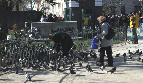 Feeding the pigeons in Paris