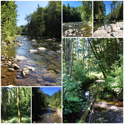 Picturesque views of the Salmon River