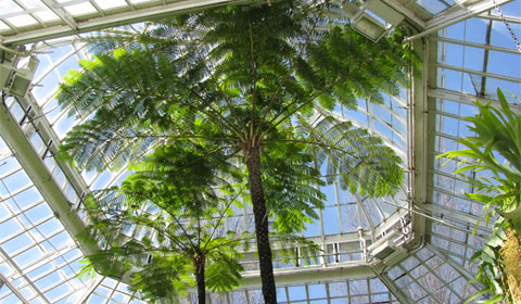 Fern Room, Phipps Conservatory