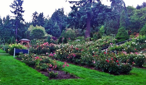 Portland Rose Garden | Alice in Wonderland