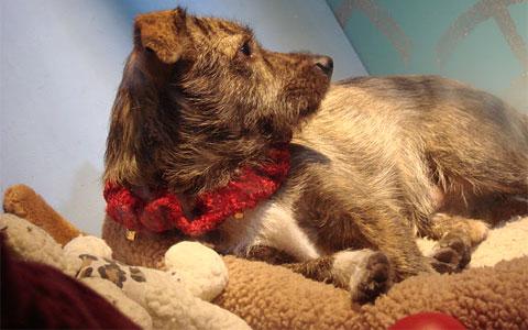 Macy's adoptable doggy