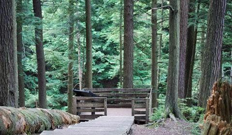 Falls Brook overlook