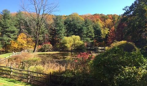 Pond walk at Jenkins Arboretum