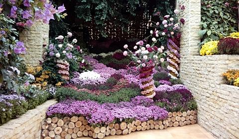 The purple display
