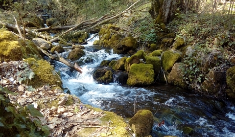 The stream that grows up to become a waterfall