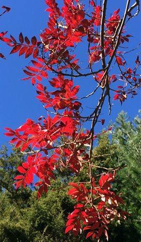 Vibrantly colored leaves