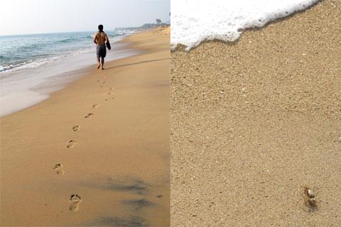 Beach footprints and crab