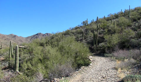 Wasson Peak via King's Canyon Trail: An awesome way to start a Tucson day!
